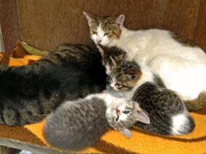 弊社には可愛い子猫が10匹います